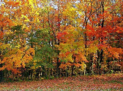 floresta-caducifolia-3.jpg