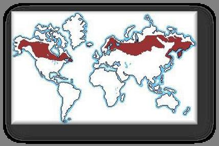 mapa_climasubpolar.png