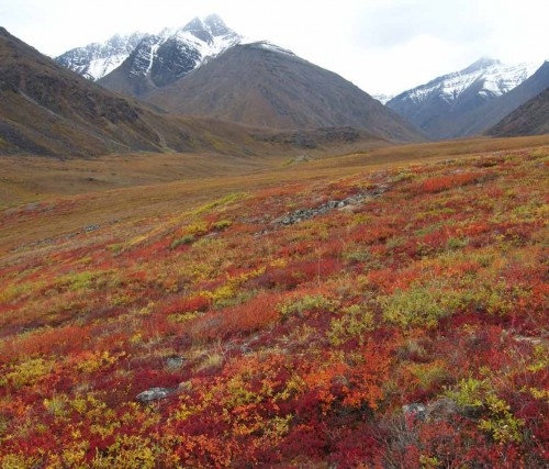 tundra58643.jpg